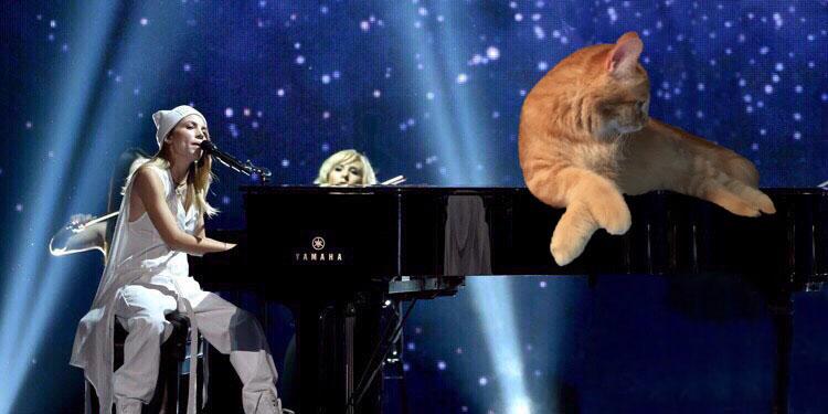 kitten piano